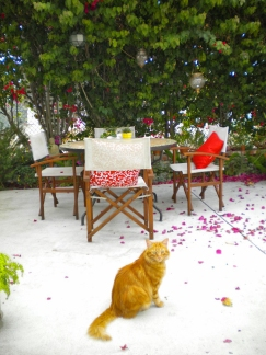 cat and bouganvillea