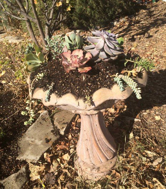 Succulent planter 2016