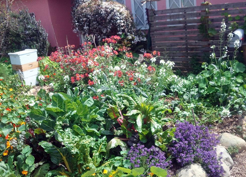Garden Reynier Village Blog