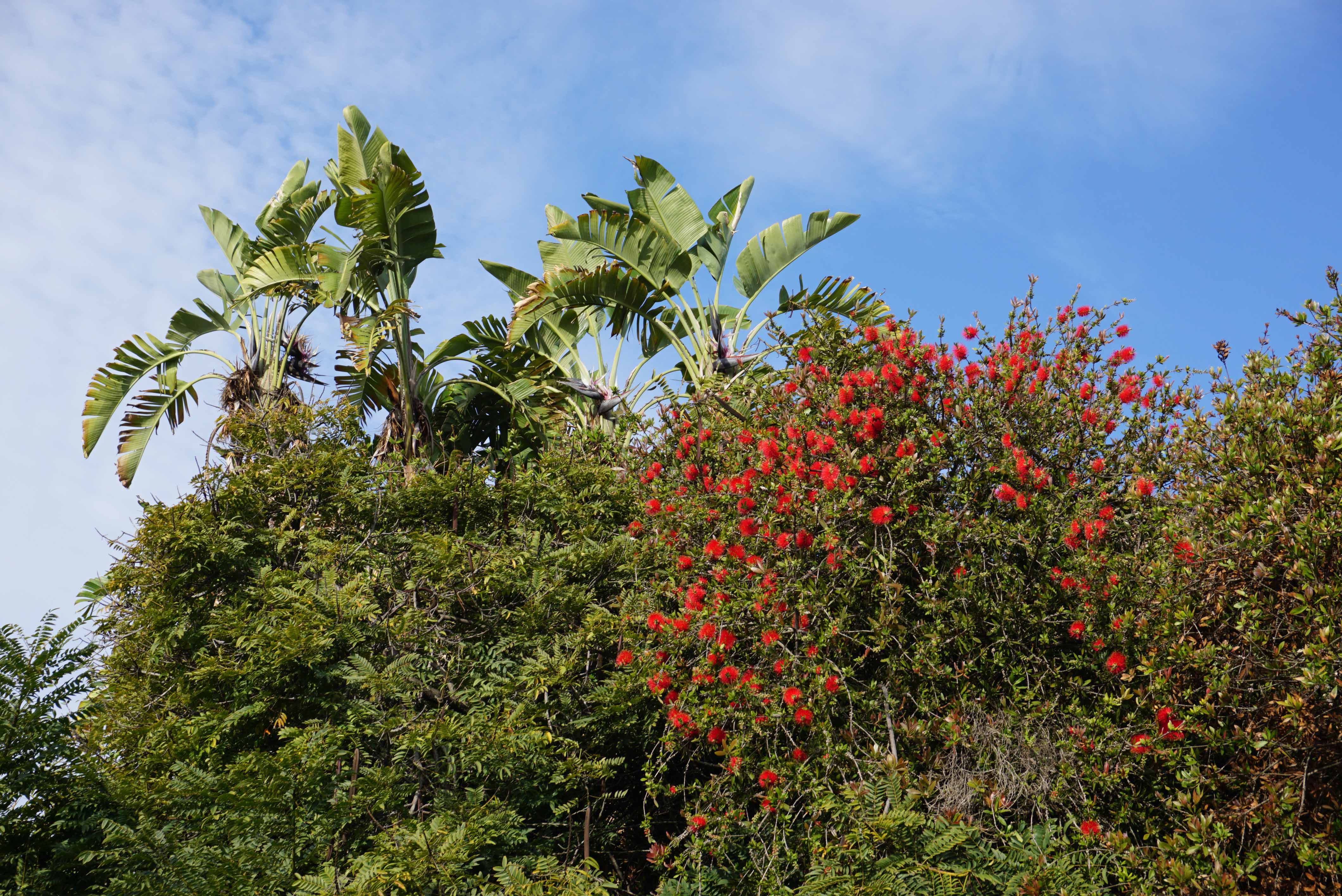 Garden | Reynier Village Blog